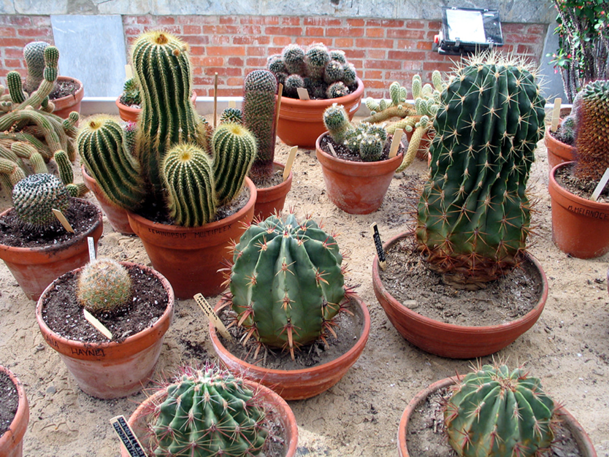 Photo 9 - What an amazing cacti display!