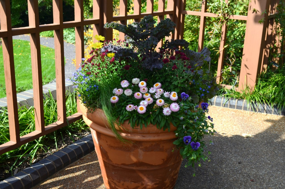 Photo 7 - A cute potted plant and flower display that is growing in partial shade.
