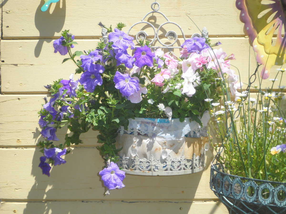 An old bathroom wall hanger that I re-purposed into a container for petunias.