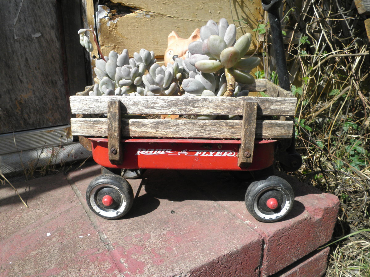 A kids toy wagon that I re-purposed into a container for succulents.