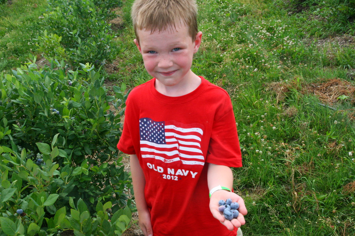 Pick your own blueberries (and more) in the Finger Lakes.