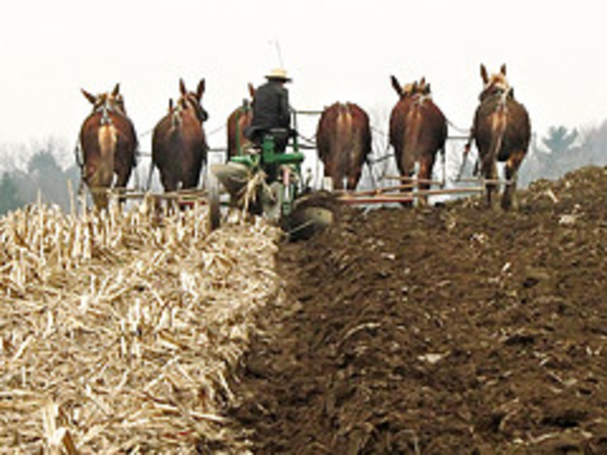 6 horse power