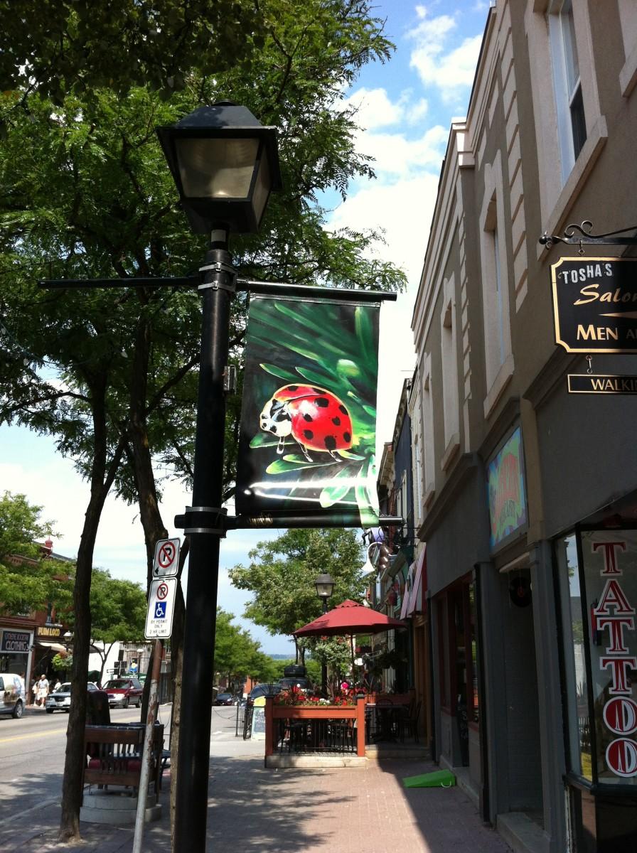 A Colorful ladybug hangs outside a shop.