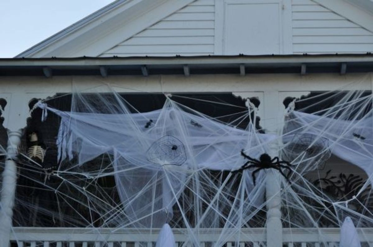Spider in spider webs are spooky