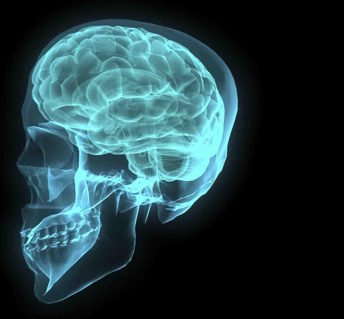an introduction to the human brain facts anatomy and