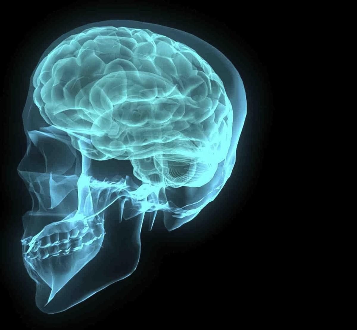 An artistic representation of the human brain