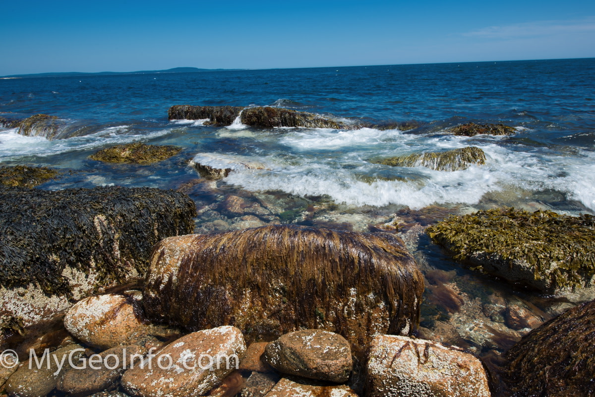 Seaweed and tidal pools in Acadia National Park, Bar Harbor Maine.