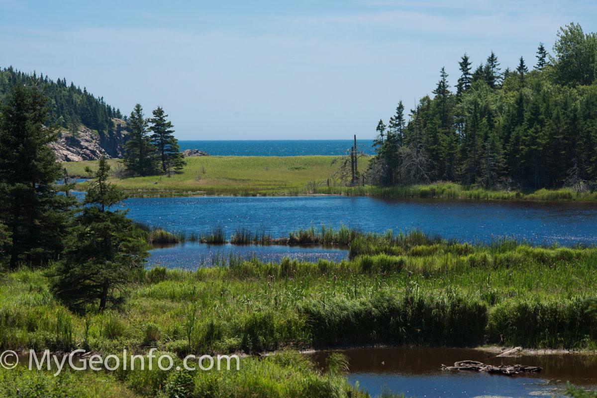 Coastal marsh in Acadia National Park, Maine.
