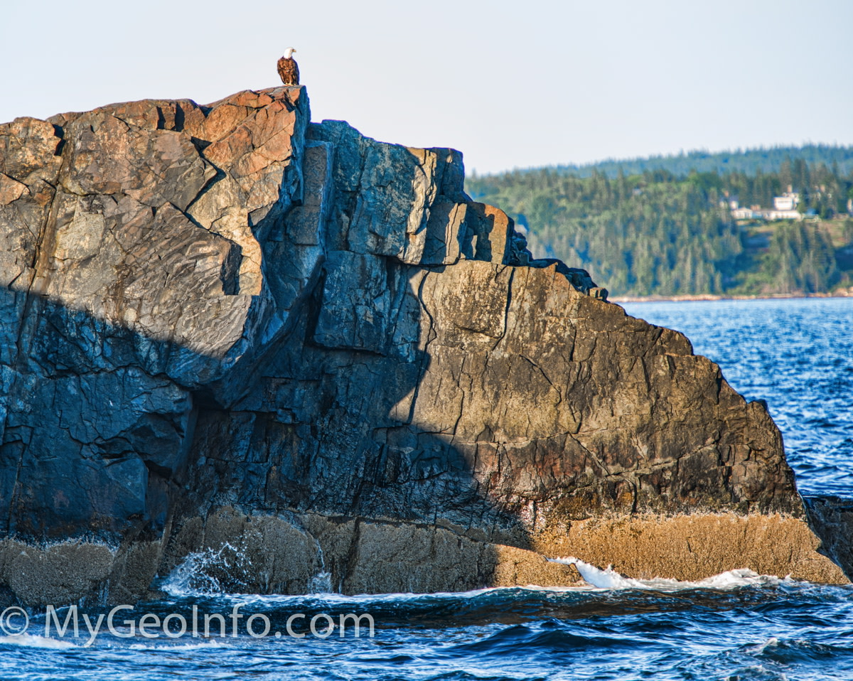 Photo of young bald eagle, taken on nature cruise of Bar Harbor and Acadia National Park seashore.
