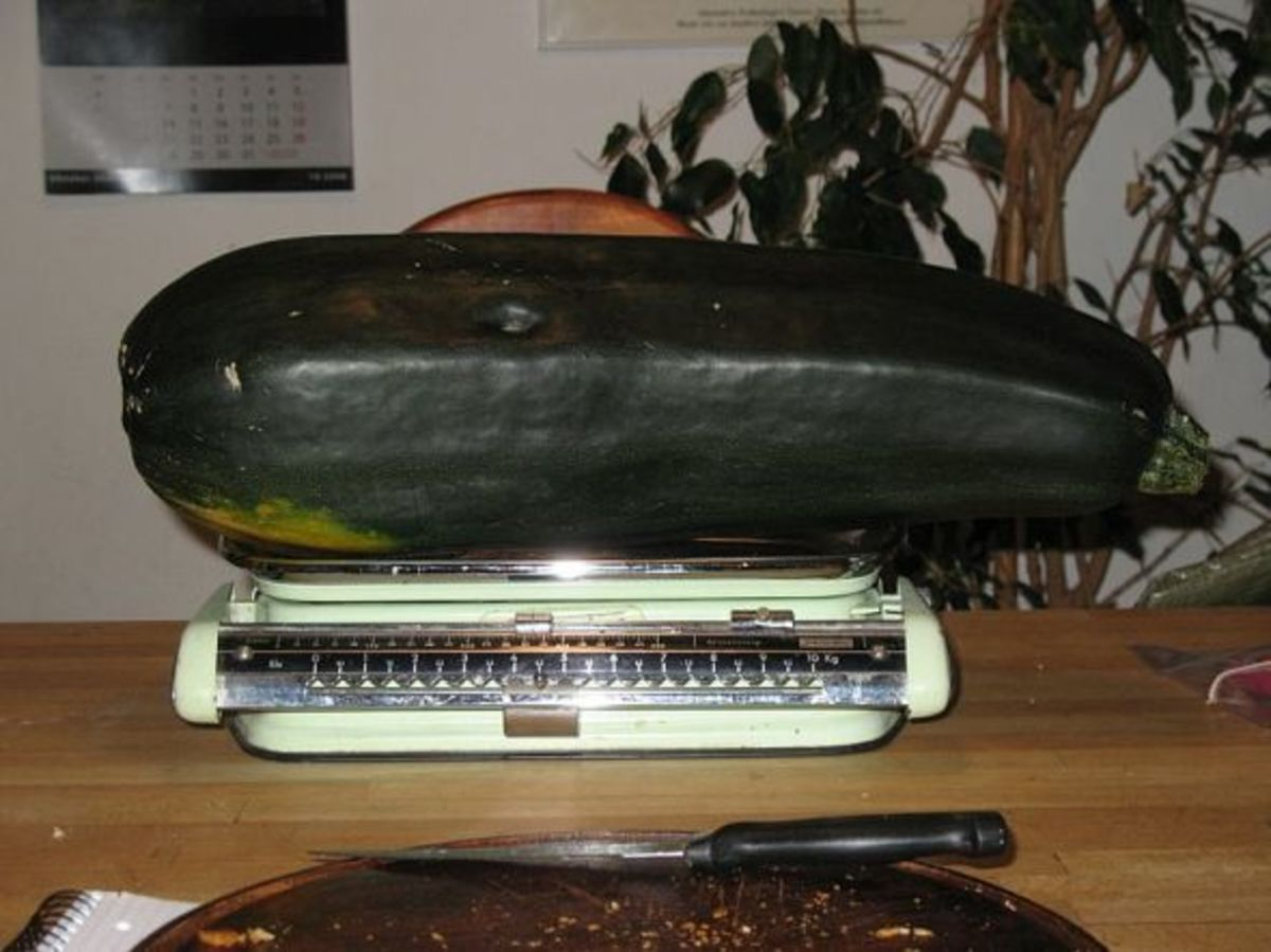 That's one HUGE zucchini!