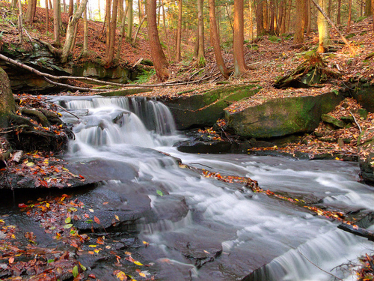 fall-photo-picture-ideas