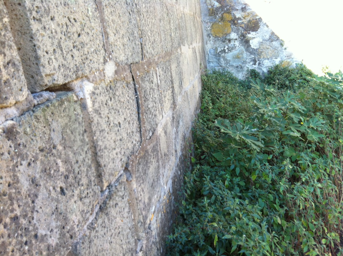 Cracking out-house walls due to fig root damage