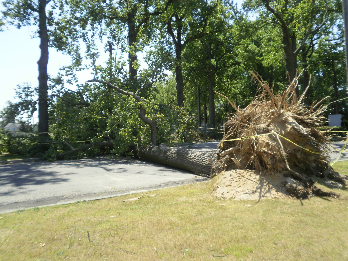 This tree fell across the road.