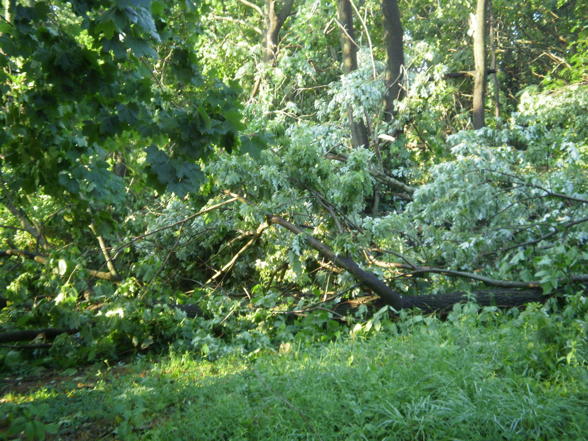Trees down in the back yard-Thank God they missed the house. We were lucky.