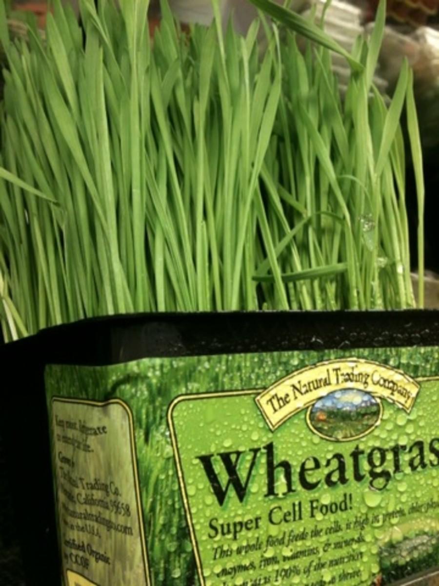 Anti-Aging Benefits of Wheatgrass