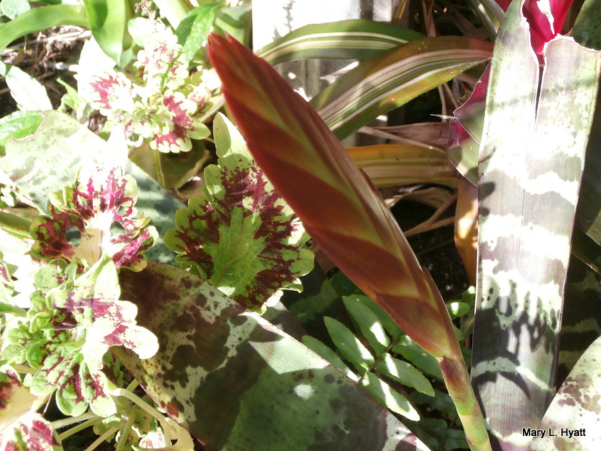 This is a beautiful red bloom on one of my Bromeliads.