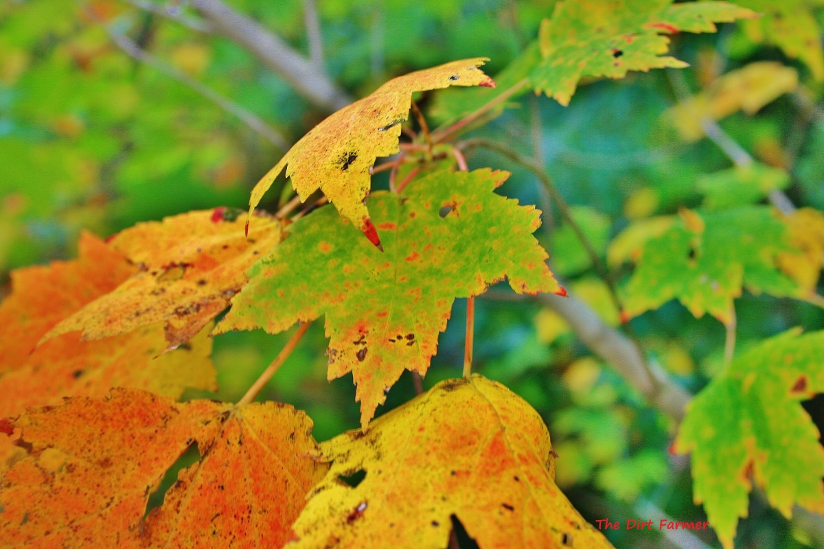 Low in nitrogen, autumn leaves break down slowly when composted by themselves.