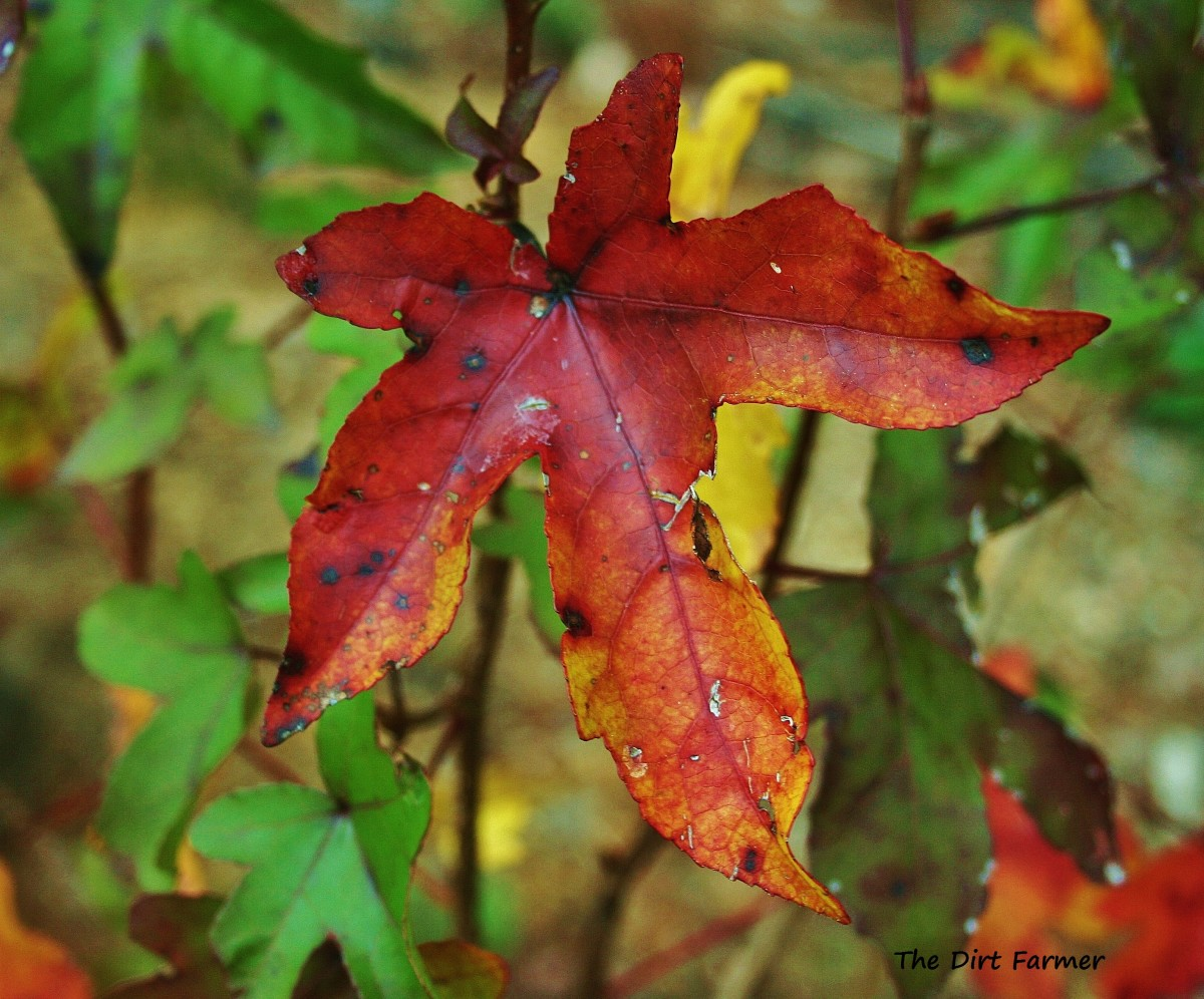using-autumn-leaves-in-the-garden
