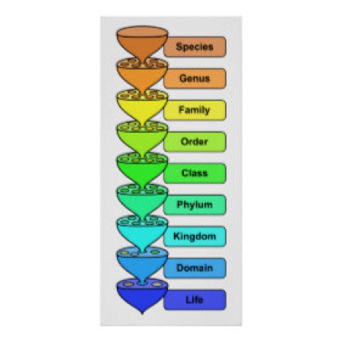 Organic Life Biological Classification Chart