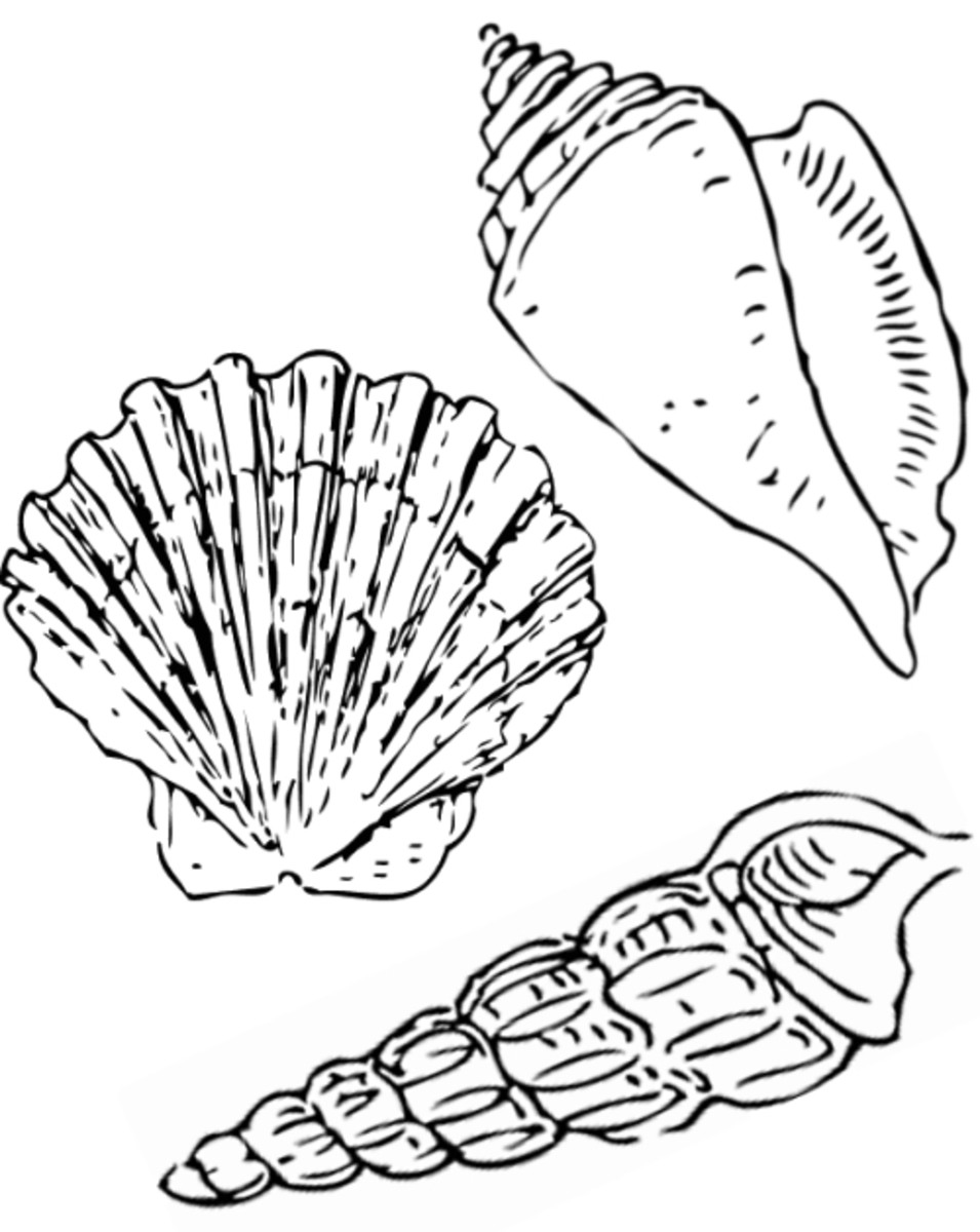 molluscs Colouring Pages