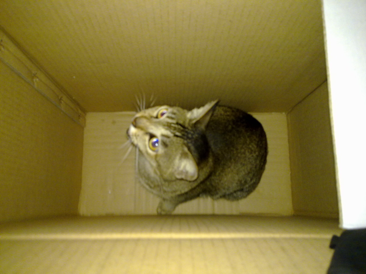 Anyone out there?...Help!!!.....Helloooo!!!!.. Dang! I shouldn't have trusted a box!