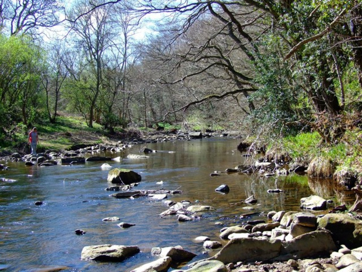 River Derwent, County Durham - there are several other rivers by this name, one in Yorkshire that runs into the Ouse at Riccall, another that runs from Staffordshire into Derbyshire where it joins the Trent
