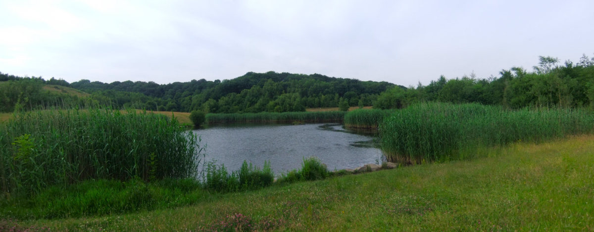 Far Pasture Wetlands is another example of 'recycling' central County Durham's industrial past