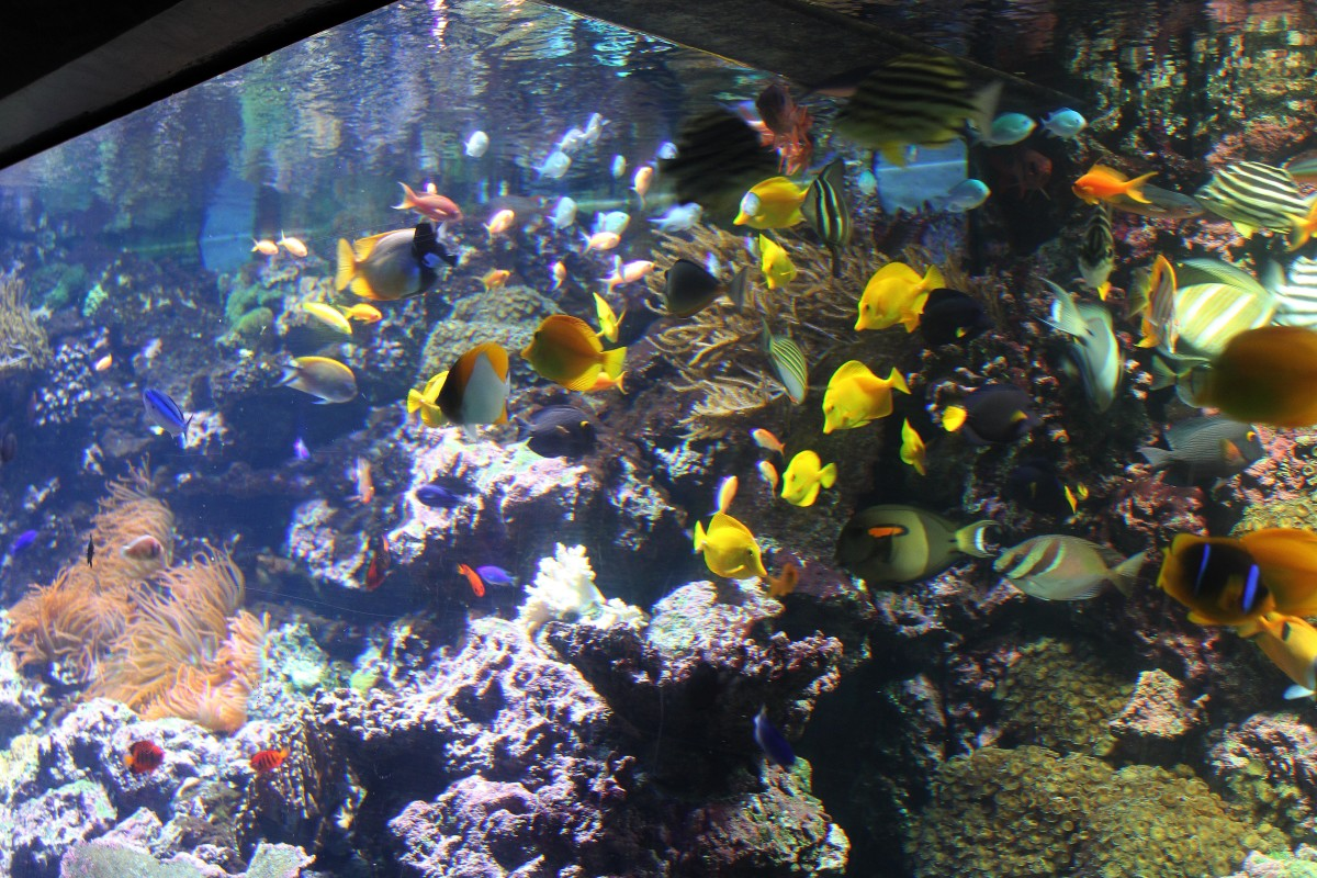 The aquarium - a special location for a special event.