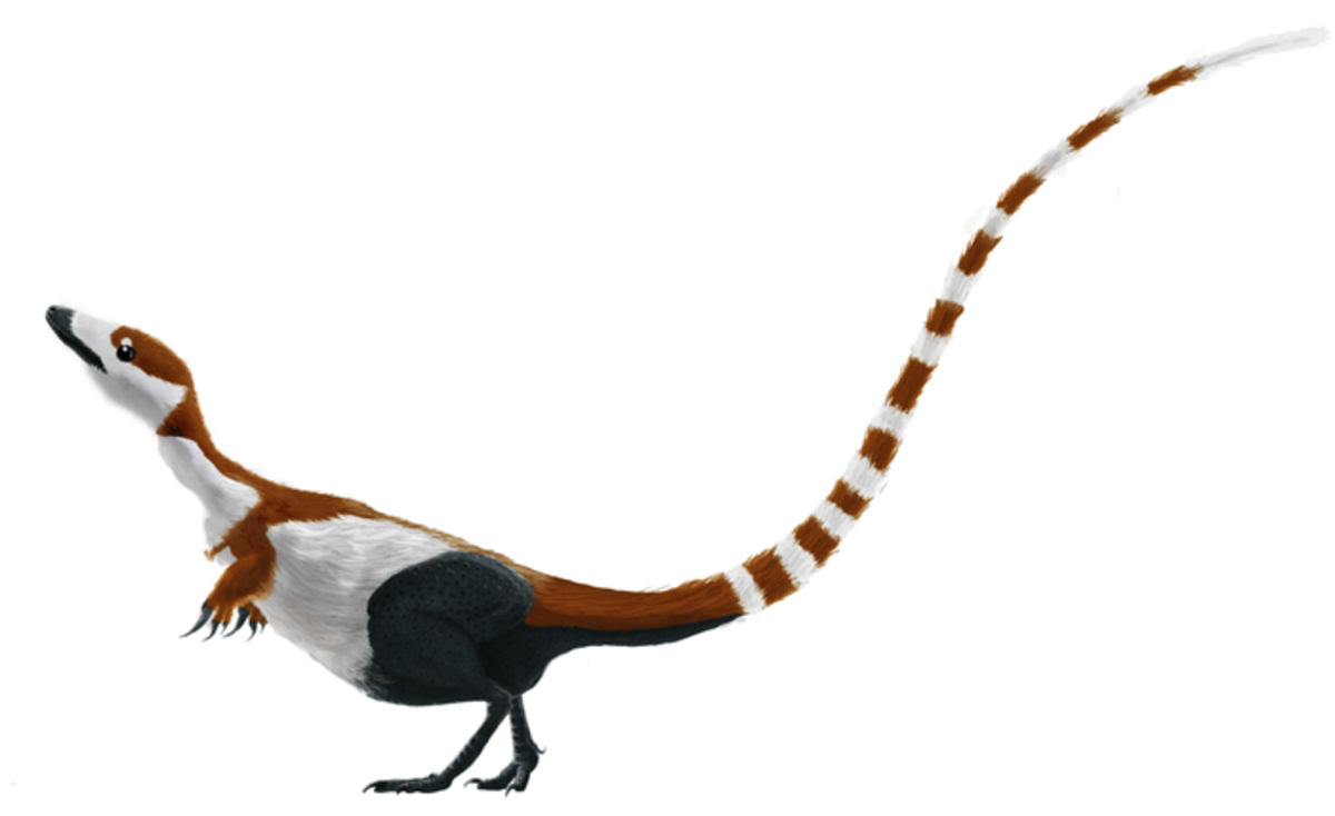 Digital illustration of the coelurosaurian dinosaur Sinosauropteryx prima, based on the holotype specimen. Coloration and pattern follows Zhang et al 2010.