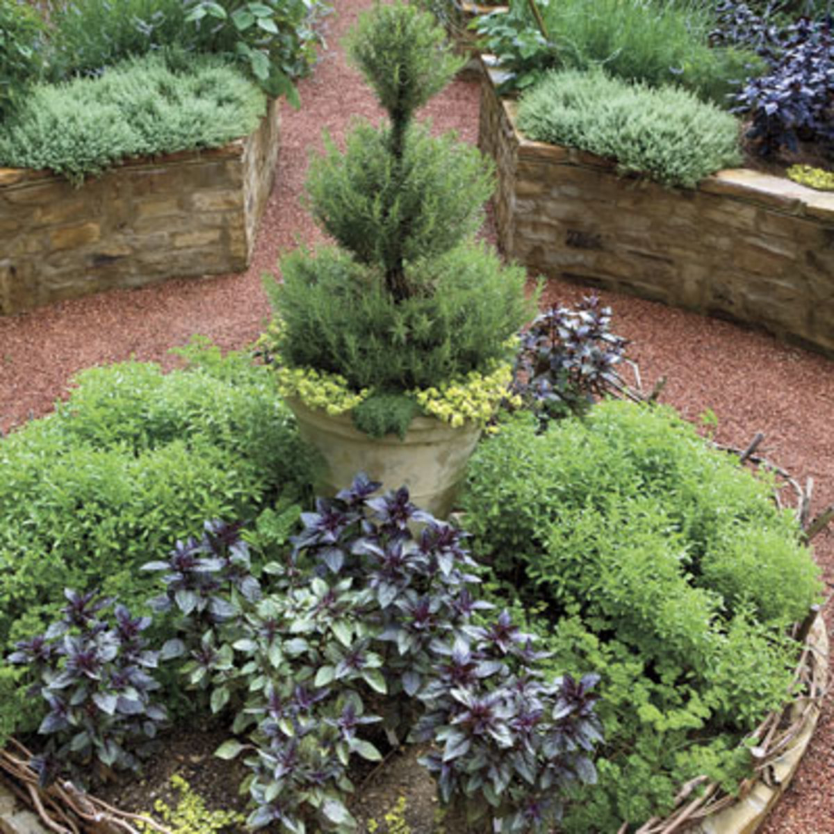 Add some height to the center of a flowerbed by placing a very vertical potted plant in the middle. Here, a potted rosemary topiary rises above the other edibles in this bed.
