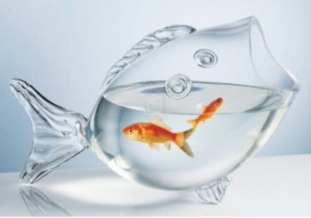 Fish Shaped Fish Bowl