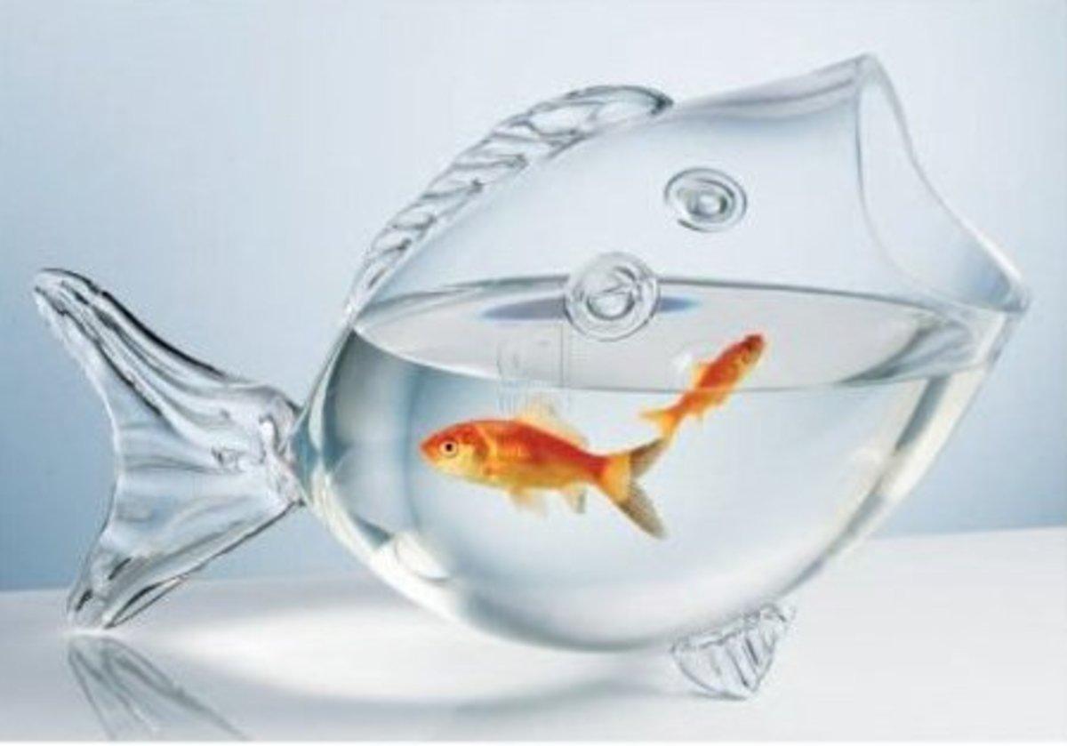 Fish Shaped Fish Bowl