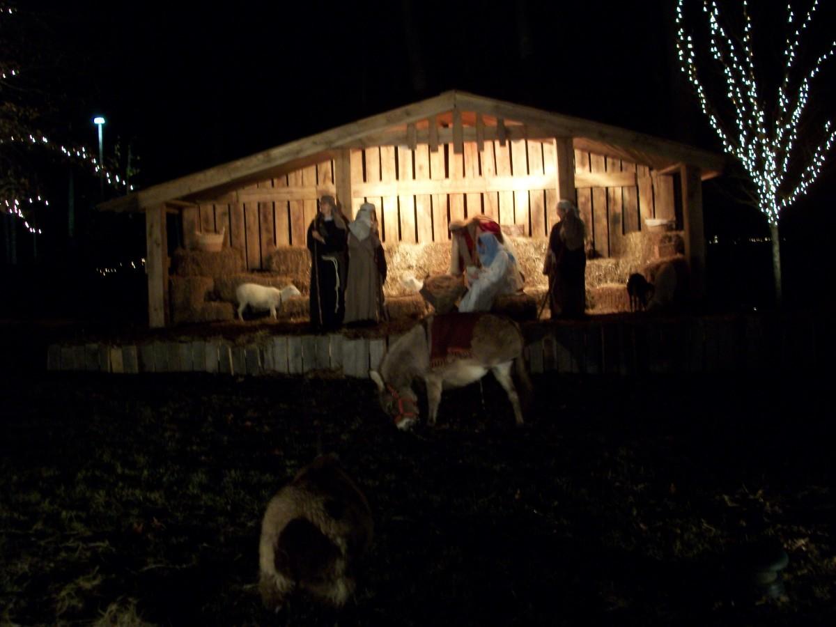 Nativity scene with a few live animals