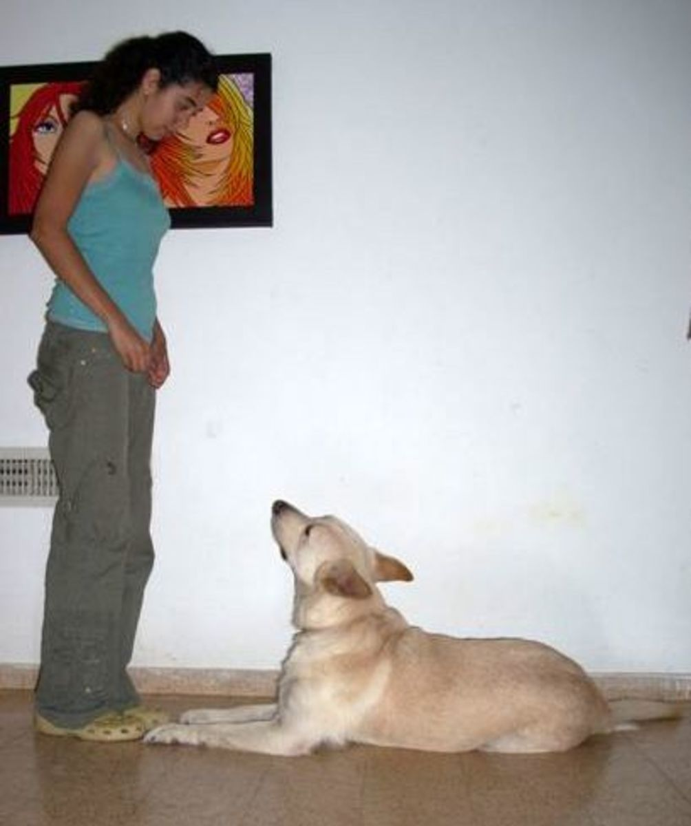 The same techniques of reinforcements used in dog training can also be applied to humans - human training. Interestingly, even while a human trains a dog, the reaction of the dog acts as positive and negative reinforcement on the human .