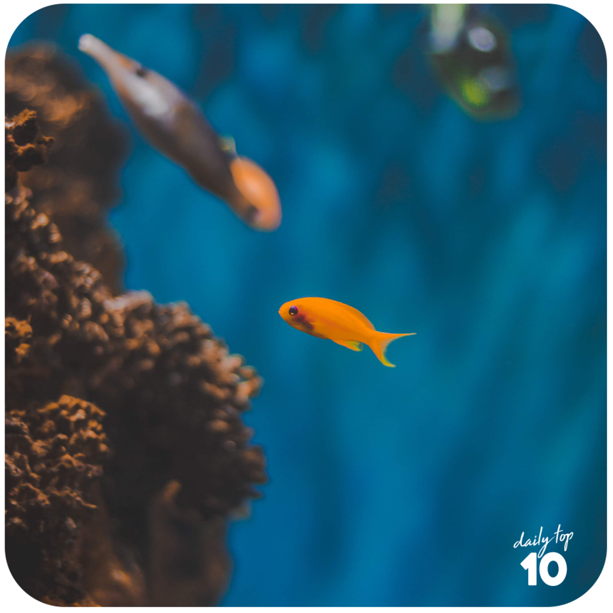 Coral reefs are shelter to small fishes so they are crucial in sustaining fish population.