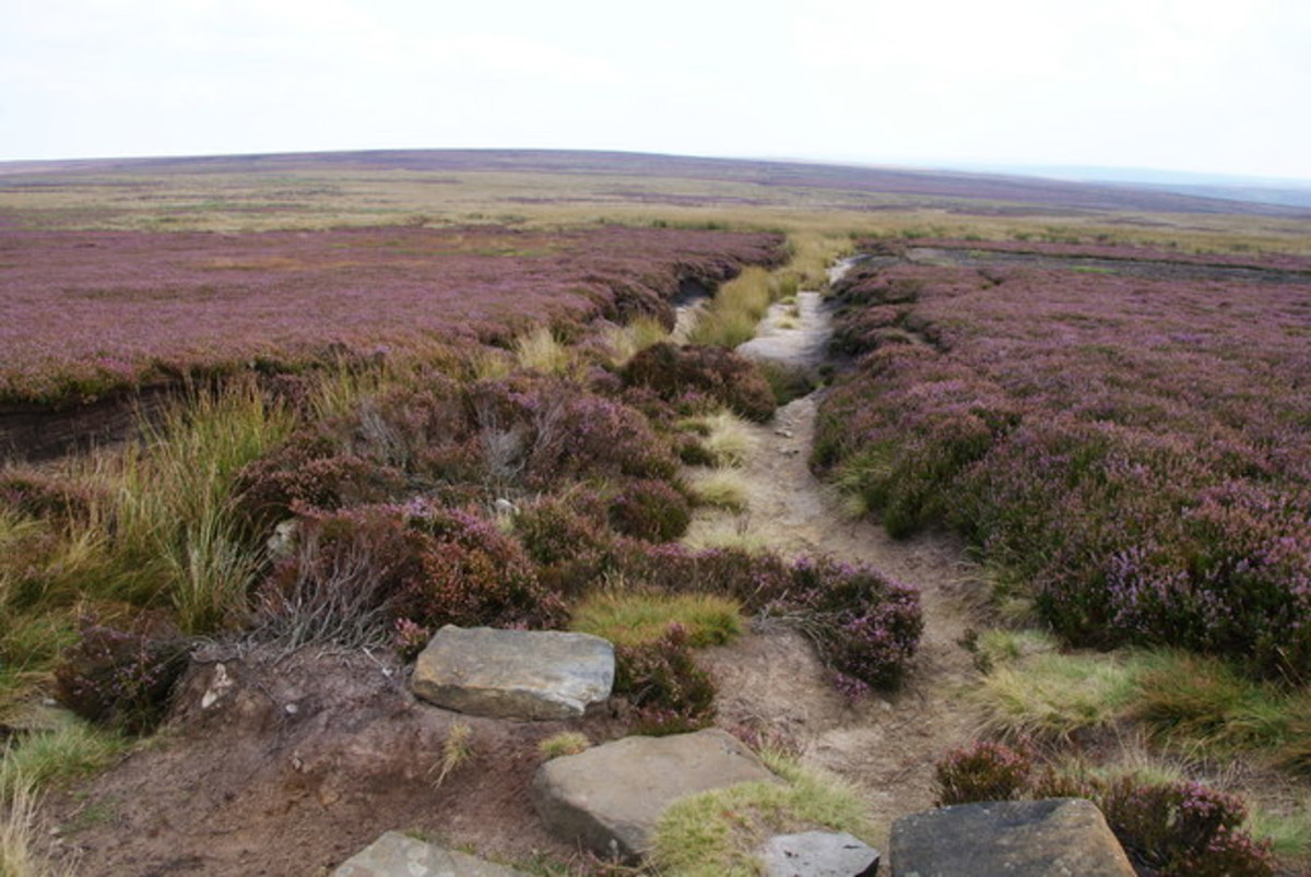 Further on eastward from Fat Betty the state of the track on Rosedale Moor calls for vigilance in avoiding injury, although the enjoyment is still there. Walkers should wear strong footwear and carry weatherproofs.