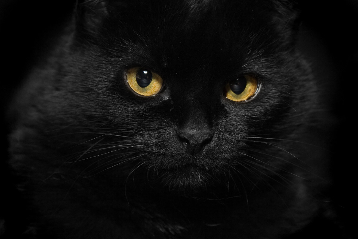 Celtic Mythology - cat sith