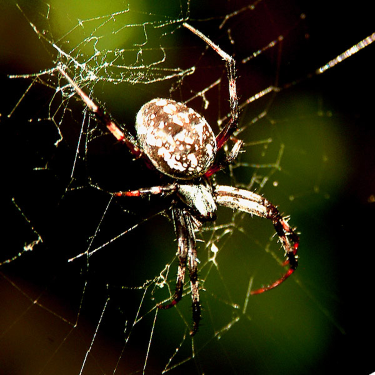 Spiders are closer to you than you may think!