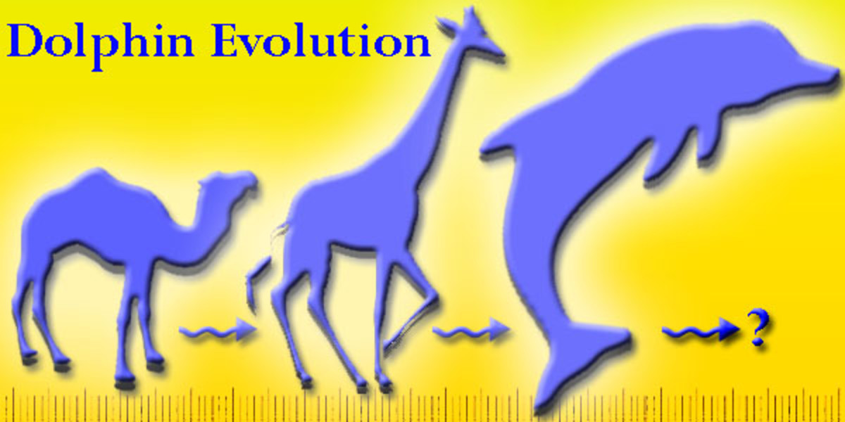 Dolphins are said to have evolved from early camel and giraffe ancestors.