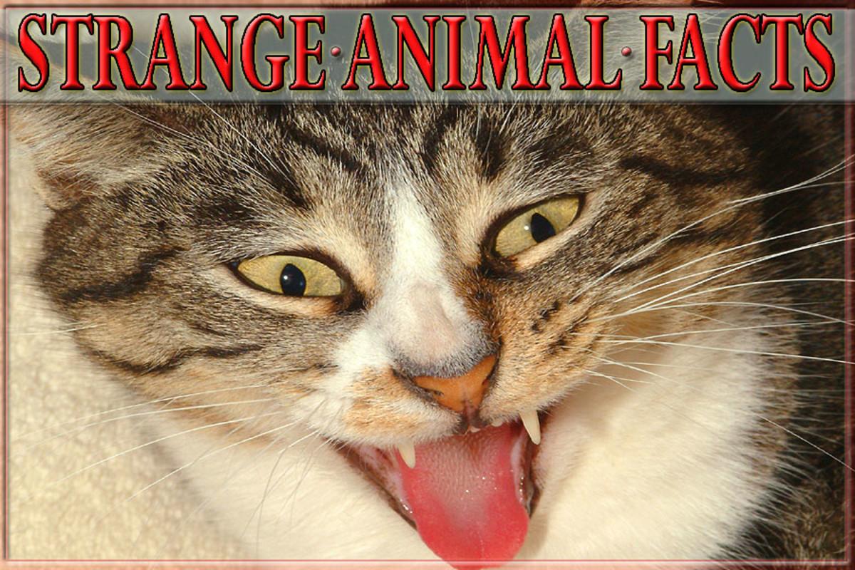 25 Strange Animal Facts