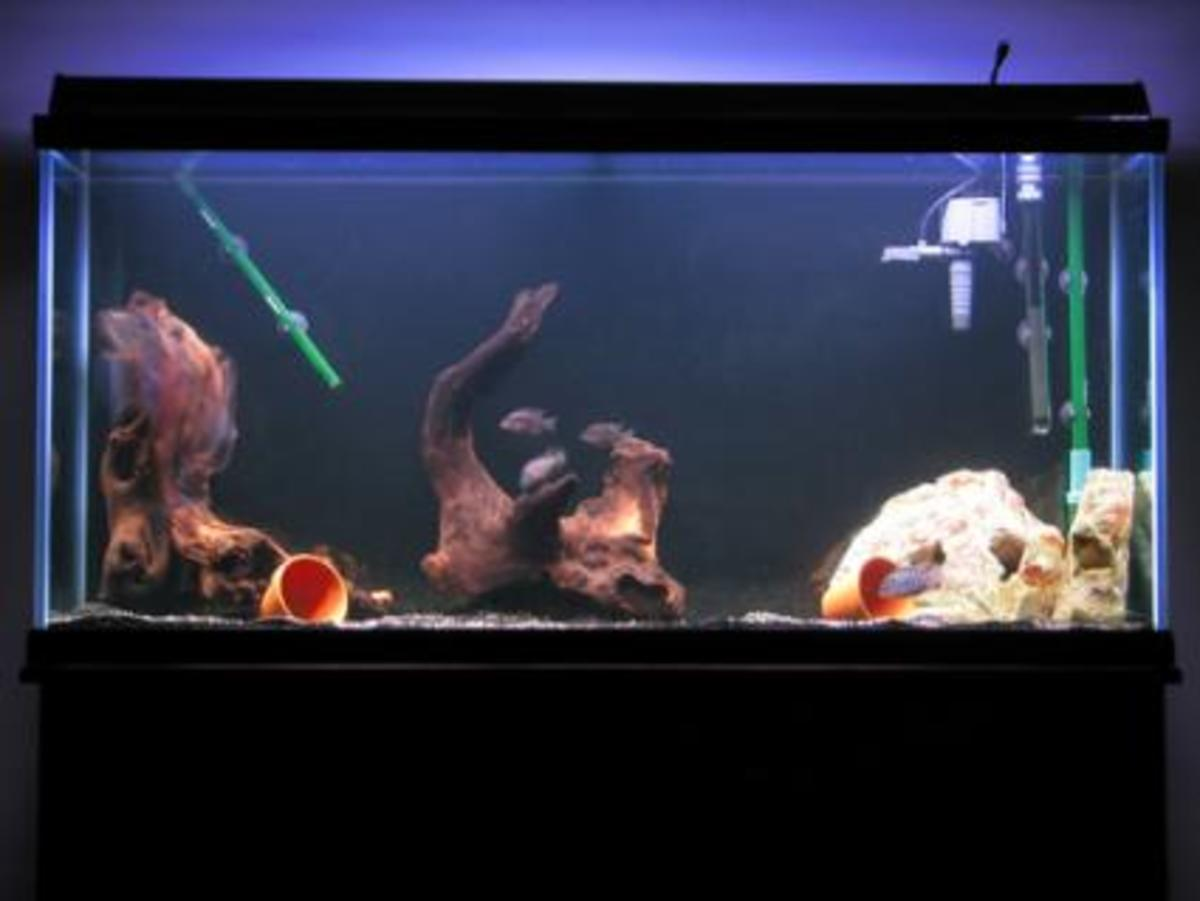 choosing-the-quietest-aquarium-filter-for-a-fish-tank