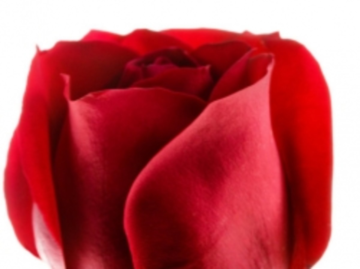 anything-but-red-roses