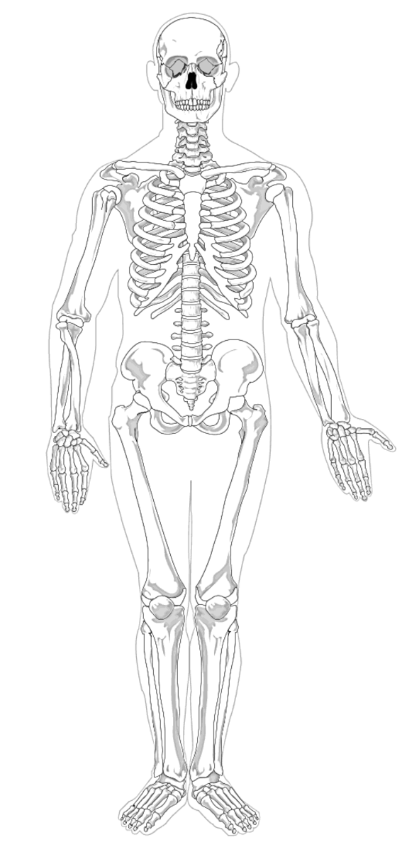 Your bones are made up of cells