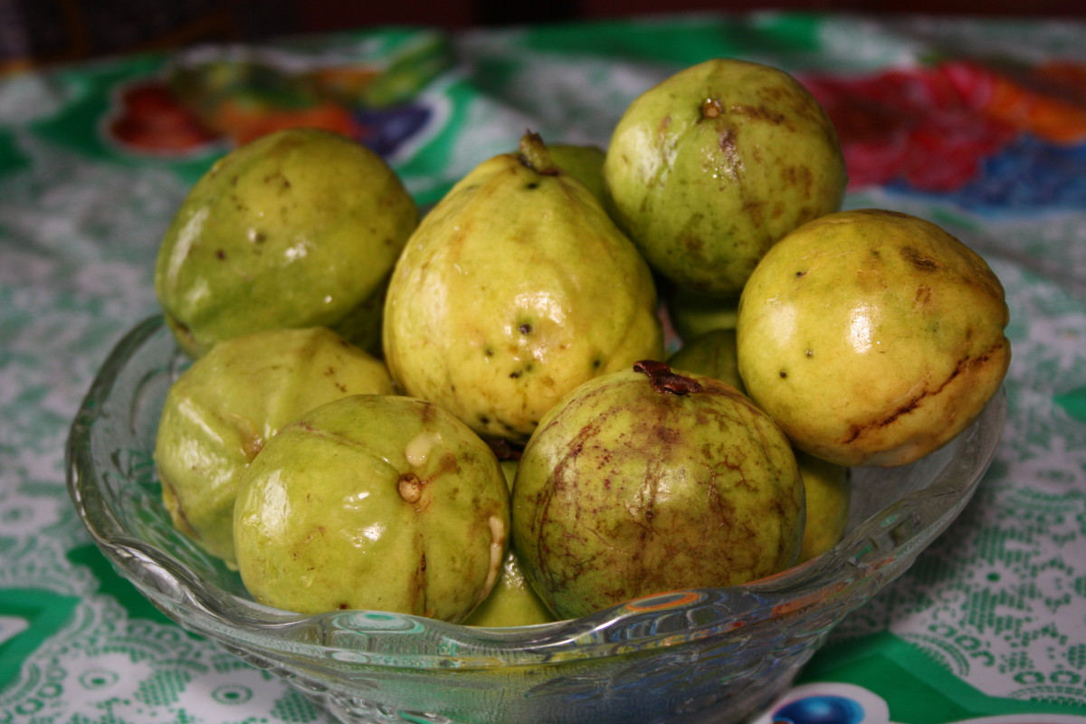 The guavas that I have harvested.