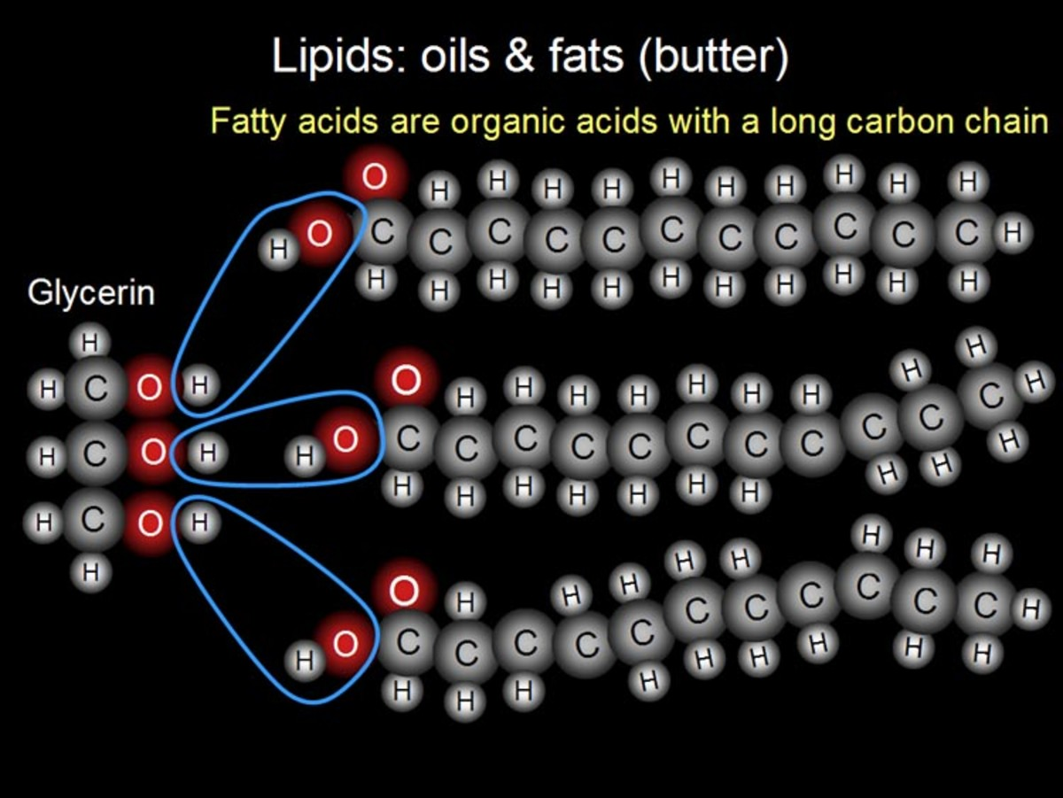 lipids-fats-and-oils