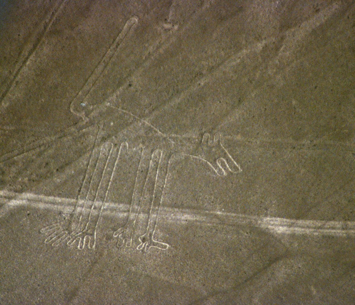 The Nazca Lines included pictures of animals