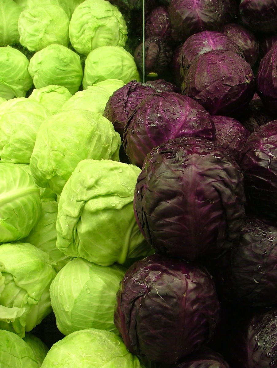 Green and Purple Cabbage