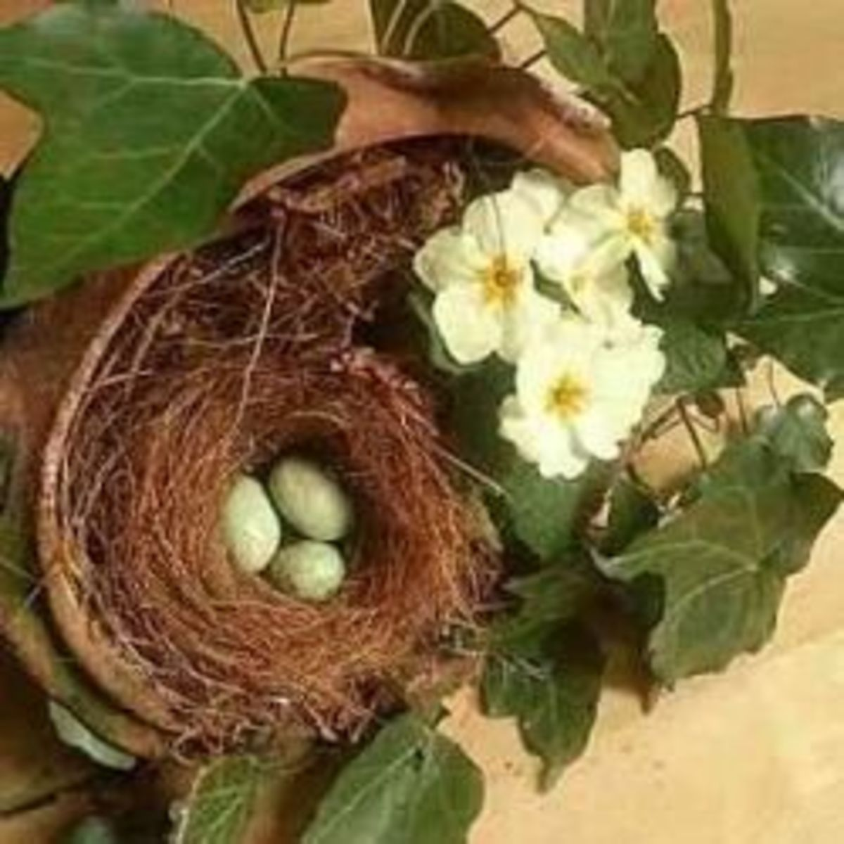 Birds Nests Crafts: Make Birds Nests