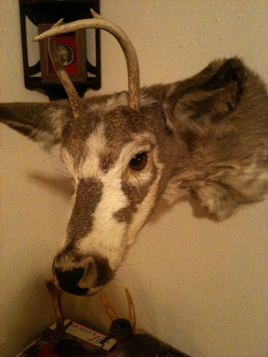 dork-deer
