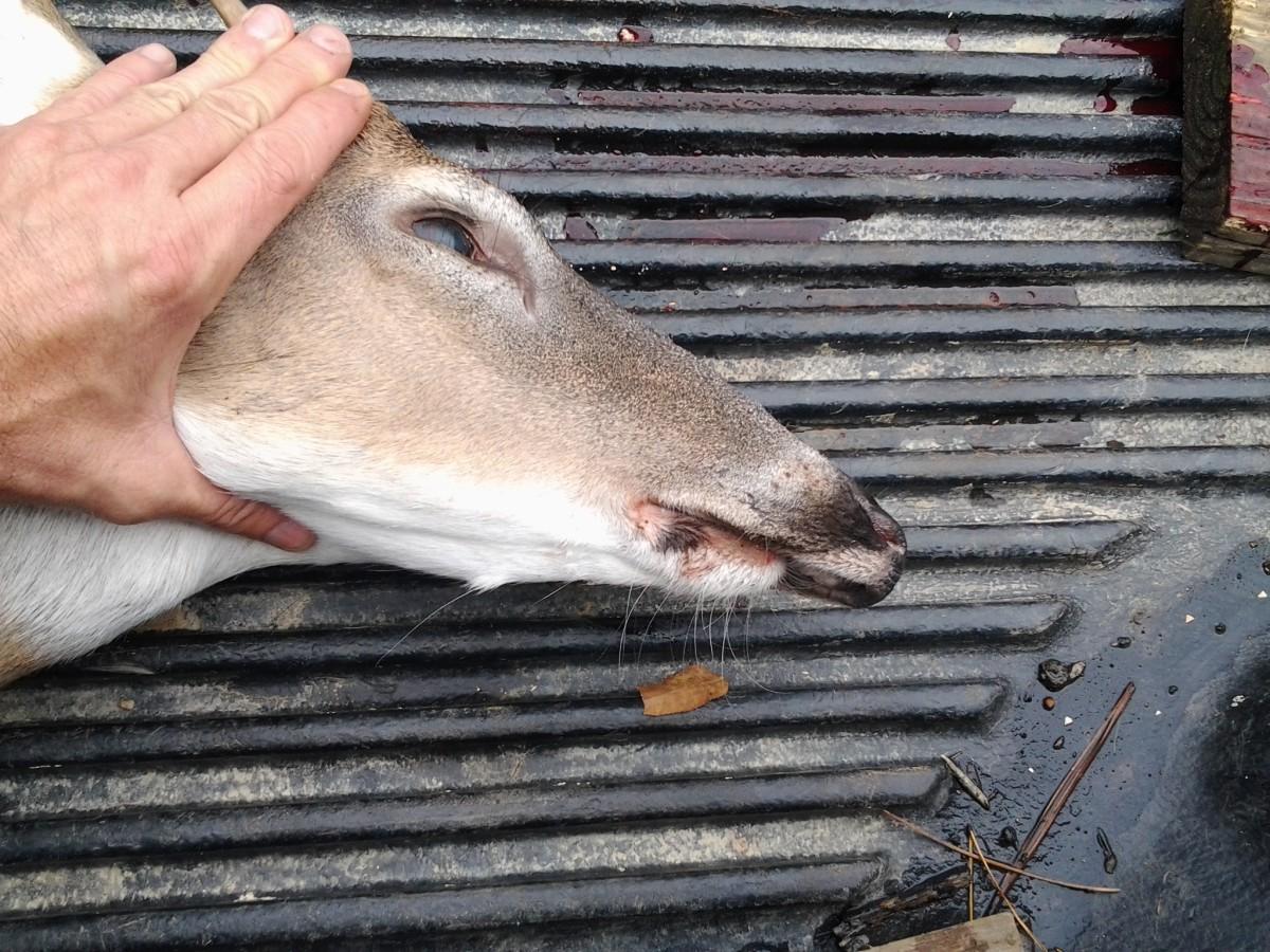 """Dork"" Deer"